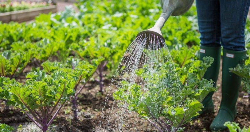 Companion Planting Spacing