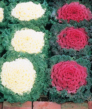 Flower Companion Planting